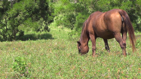 horse eating the grass on the farm Footage
