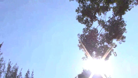 driving through the green trees with sunlight Footage