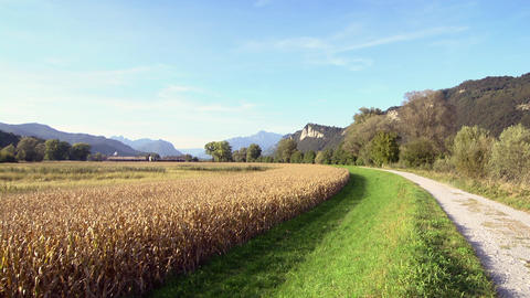 Field in Italy. Agriculture, farming, crop Footage