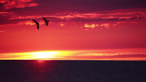 Sunset over Sea and Birds Footage