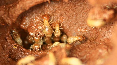termites Footage