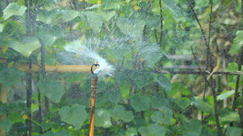 Water Sprinkler 1