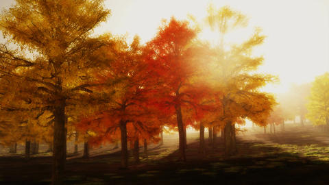 (1140) Sunshine Autumn Park Red Trees Afternoon LOOP Animation