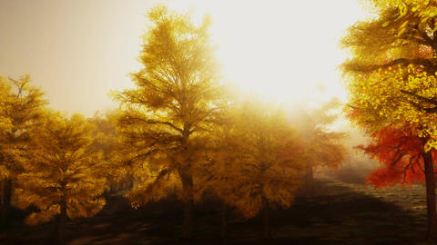 (1140) Sunshine Autumn Park Red Trees Afternoon LOOP Stock Video Footage