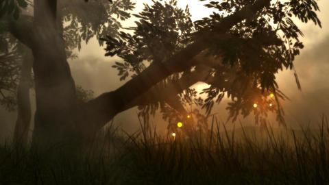 (1142) Fairy Lights Fireflies Summer Meadow Magical... Stock Video Footage