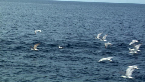 Seagulls fly water slow motion Stock Video Footage