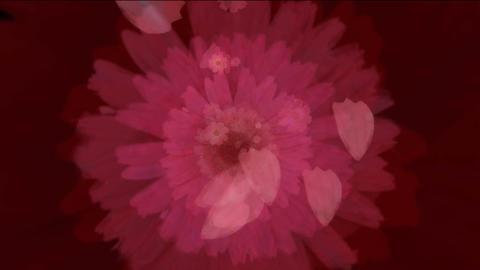 flower5b Stock Video Footage
