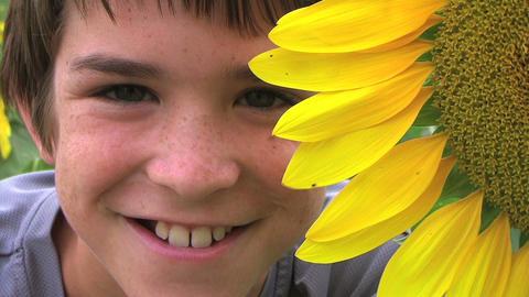 Boy Beside Sunflower Stock Video Footage