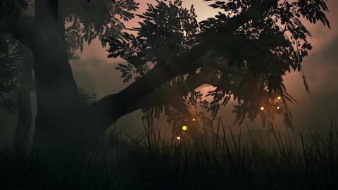 (1145) Fairy Lights Fireflies Summer Meadow Magica Stock Video Footage