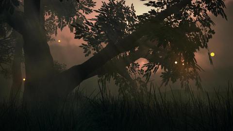 (1145) Fairy Lights Fireflies Summer Meadow Magica Animation