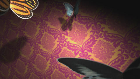 Buttterfly wings Stock Video Footage