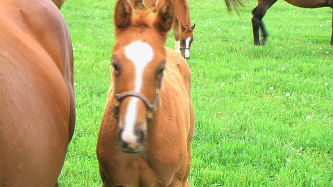Foal Close-up Stock Video Footage