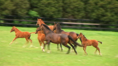Horses Running Stock Video Footage