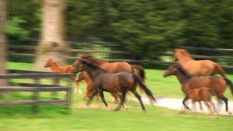 Horses Running Footage