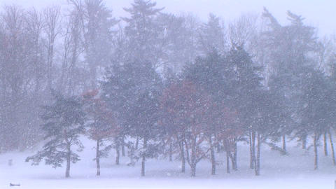 Trees in Snowstorm Stock Video Footage