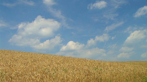 Wheat Against Clouds Time Lapse Stock Video Footage