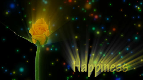 "Yellow rose ""Golden gate"" color meaning ""Happiness"" 2a... Stock Video Footage"