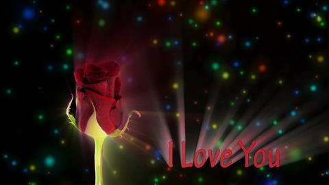 """Red rose """"Happy Hour"""" color meaning """"I Love You"""" 1a alpha... Stock Video Footage"""
