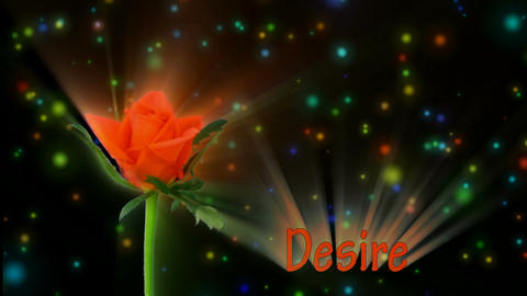 "Orange rose ""Lambada"" color meaning ""Desire"" 3a alpha matte Stock Video Footage"