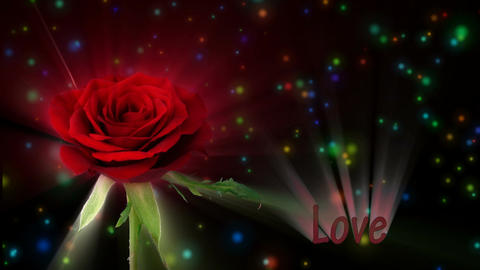 "Red rose ""Valentino"" color meaning ""Love"" 1a alpha matte Stock Video Footage"