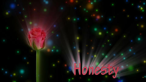 "Pale red rose ""Lorena"" color meaning ""Honesty"" 1a alpha... Stock Video Footage"