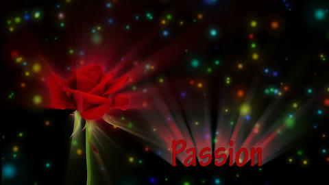 "Bright red rose ""Kardinal"" color meaning ""Passion"" 4a... Stock Video Footage"