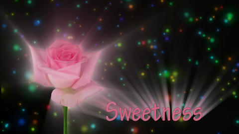 "Pink rose ""Sweet Akito"" color meaning ""Sweetness"" 1a... Stock Video Footage"