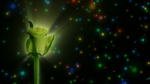 "Montage of opening green ""Jade"" rose 1 alpha matte Stock Video Footage"