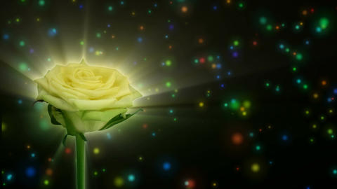 """Montage of opening green """"Jade"""" rose 1 alpha matte Stock Video Footage"""
