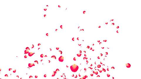 heart flower 01 Stock Video Footage