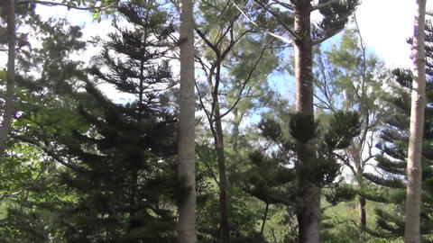 forest scenery passing through the side window of Footage