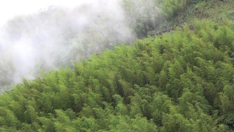green bamboo forest with cloud in asia Footage