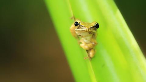 frog on the tree Footage