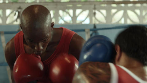 Young Athletes Boxing and Exercising Footage