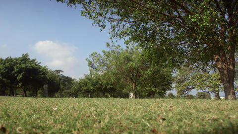 Group of young kids playing soccer match in park Stock Video Footage