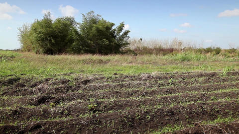 Cuban Farmer Working in The Field Hispanic Man wit Stock Video Footage