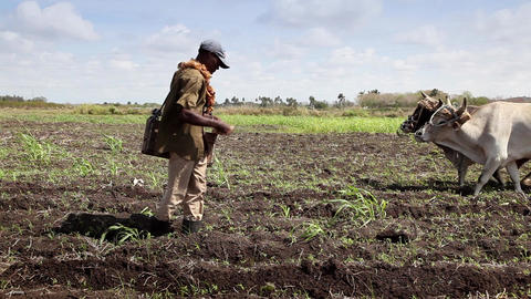 Heavy and Manual Work in The Fields People Working Stock Video Footage