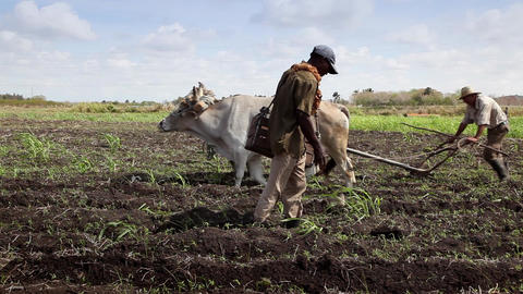 Heavy and Manual Work in The Fields People Working Footage