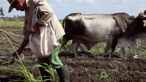 Peasants at Work in Farm Men Plowing Field and Seeding soil Stock Video Footage