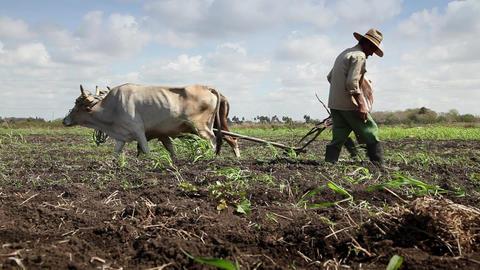 Peasants at Work in Farm Men Plowing Field and Seeding soil Footage