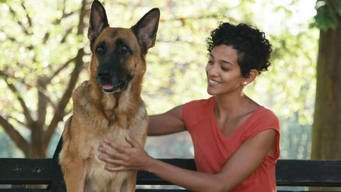 People Working As Dog Sitter With Alsatian Dog In  stock footage