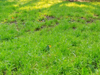 Footprints in sun on the grass. Time Lapse. 320x24 Stock Video Footage