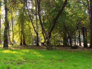 Sunny day in the park. Panarama. Time Lapse. 320x2 Stock Video Footage