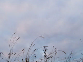 Overcast on the grass. Sunset. Time Lapse. 320x240 Stock Video Footage