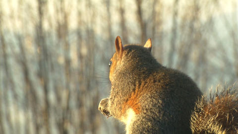 squirrel close up slow motion 04 Live Action