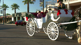 Horse Drawn Carriage Stock Video Footage