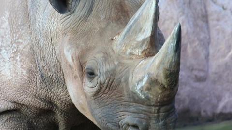 Rhino Footage