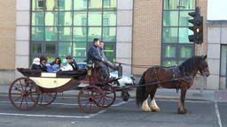 Horse-drawn Carriage Footage