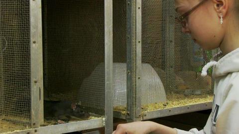 petting zoo Footage