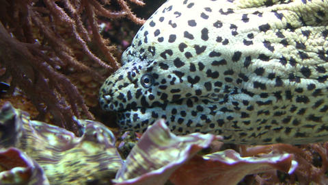 Moray Eel Footage